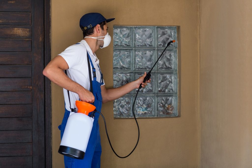 pest cleaning