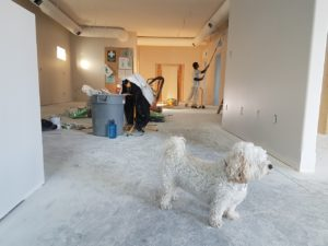 renovating house with a dog
